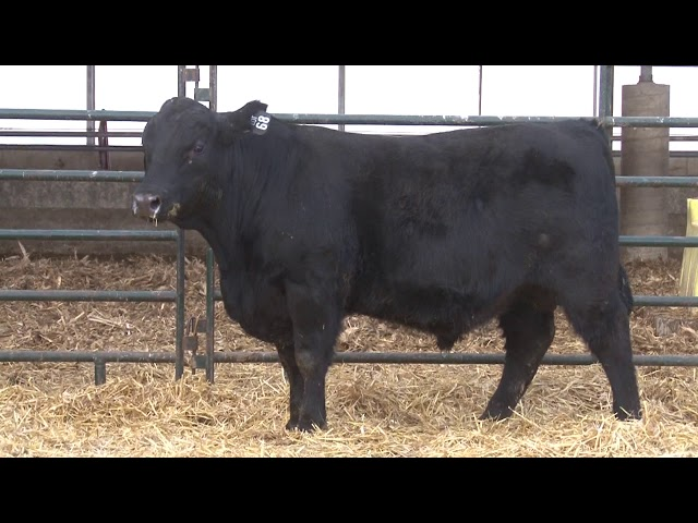 Schiefelbein Angus Farms Lot 68