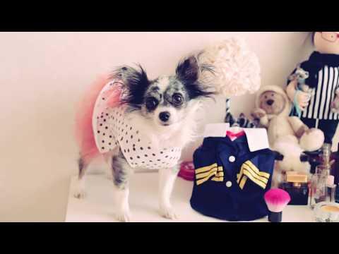 Как узнать размер собаки чтобы купить ей одежду
