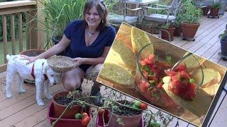 Tomato and Basil Bruschetta Recipe - Using Your Tomatoes and Basil