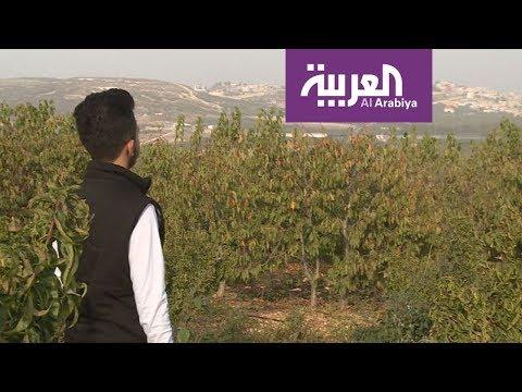 العربية في الجليل |  الجش أرض التفاح والكرز  - نشر قبل 2 ساعة