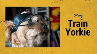 How to Potty Train a Yorkshire Terrier