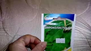 видео Щавель