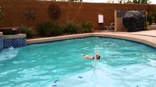 American Cocker Spaniel Diving Into Pool