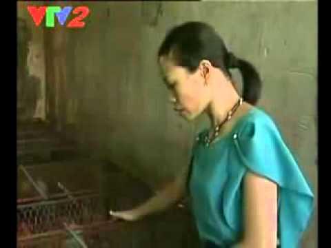 Video về chồn nhung đen phát sóng trên kênh VTV2 ..flv
