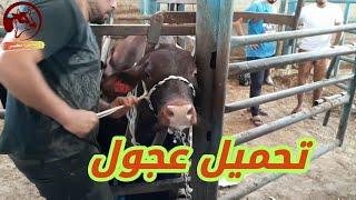 تحميل عجوول يوم عرفا داخل مزرعة عبد ربه عفاانه2020