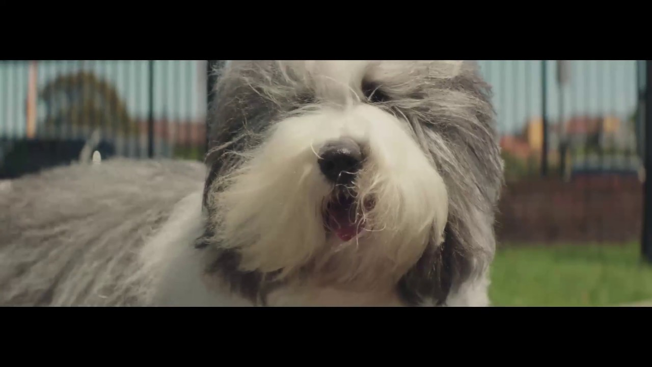 The Dulux Dog - YouTub...