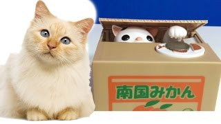 Cat Piggy Bank Super cute Super Cat