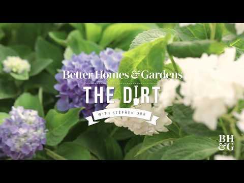 How To Grow Hydrangeas | The Dirt | Better Homes & Gardens