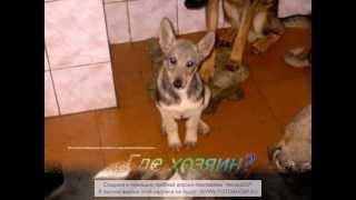 ролик для кемеровского приюта для животных!