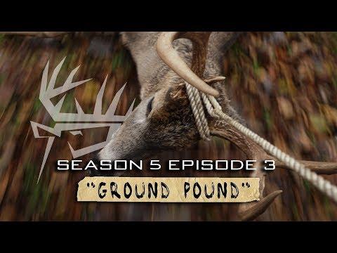 Stalking Whitetail Deer