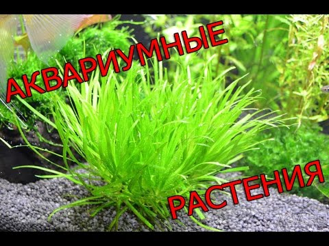 Аквариумные растения. Часть 1