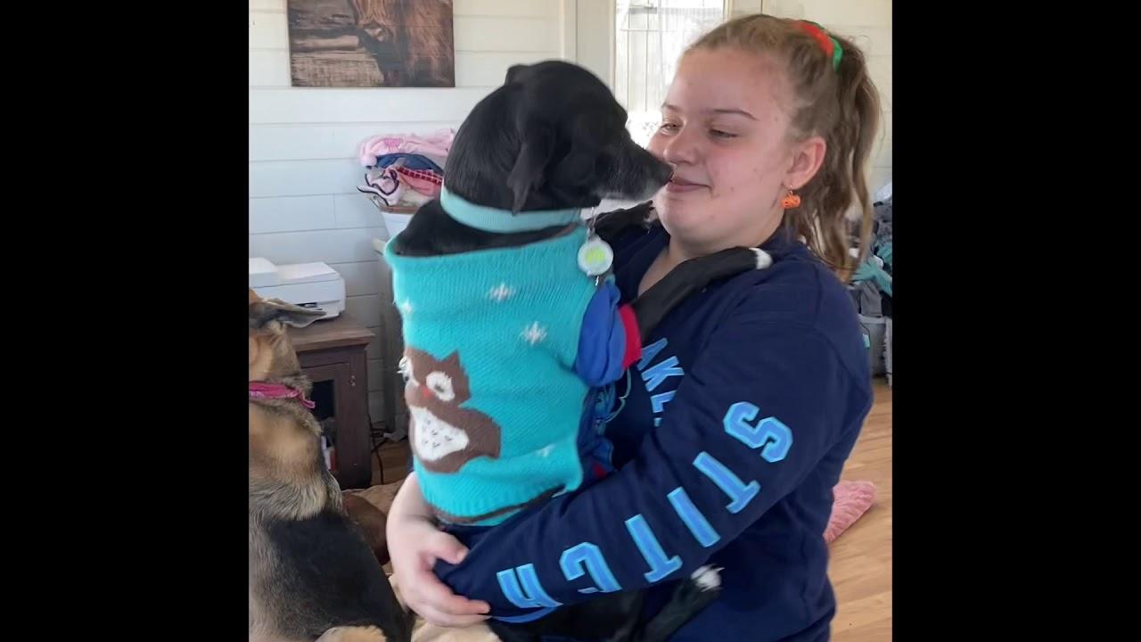 Miami Animal Rescue COVID Rescues