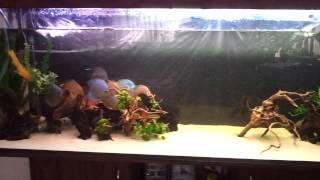 Уход за кварцевым песком в аквариуме. 840 л.