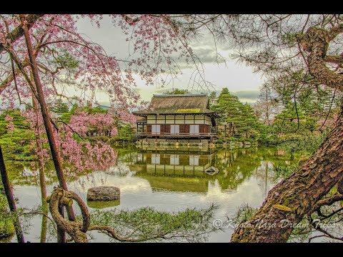 Sakura at The Shin'en Gardens of Heian Shrine In Kyoto!