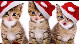 Новогодние котики  Приколы с кошками  смешные кошки  Christmas cat video with cats funny cats