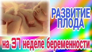 развитие плода на 37 неделе беременности/Календарь беременности!