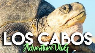 EXPLORING NATURE IN LOS CABOS MEXICO WITH CAJAFRESCA