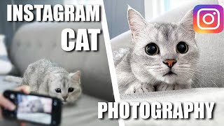 How to take Stunning Intagramworthy Photos of your CATS!