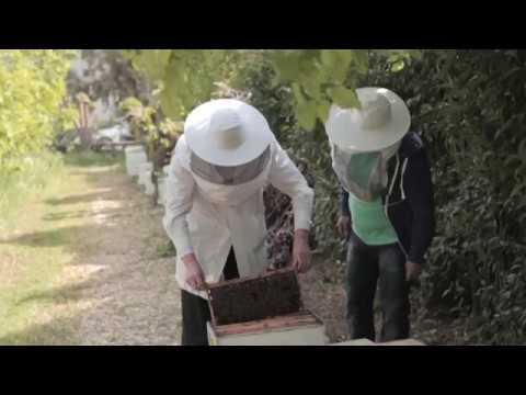 ShoWooD - πράσινες αποστολές Επεισόδιο 1