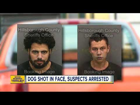Stolen vehicle suspects shoot dog while trying to evade police