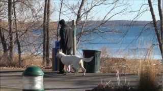 Gunner (white German Shepherd) Advanced Obedience Training