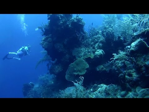 Grand Turk - Austin's Reef - 7000 ft Wall - HD