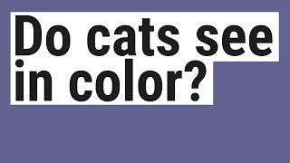 Do cats see in color?