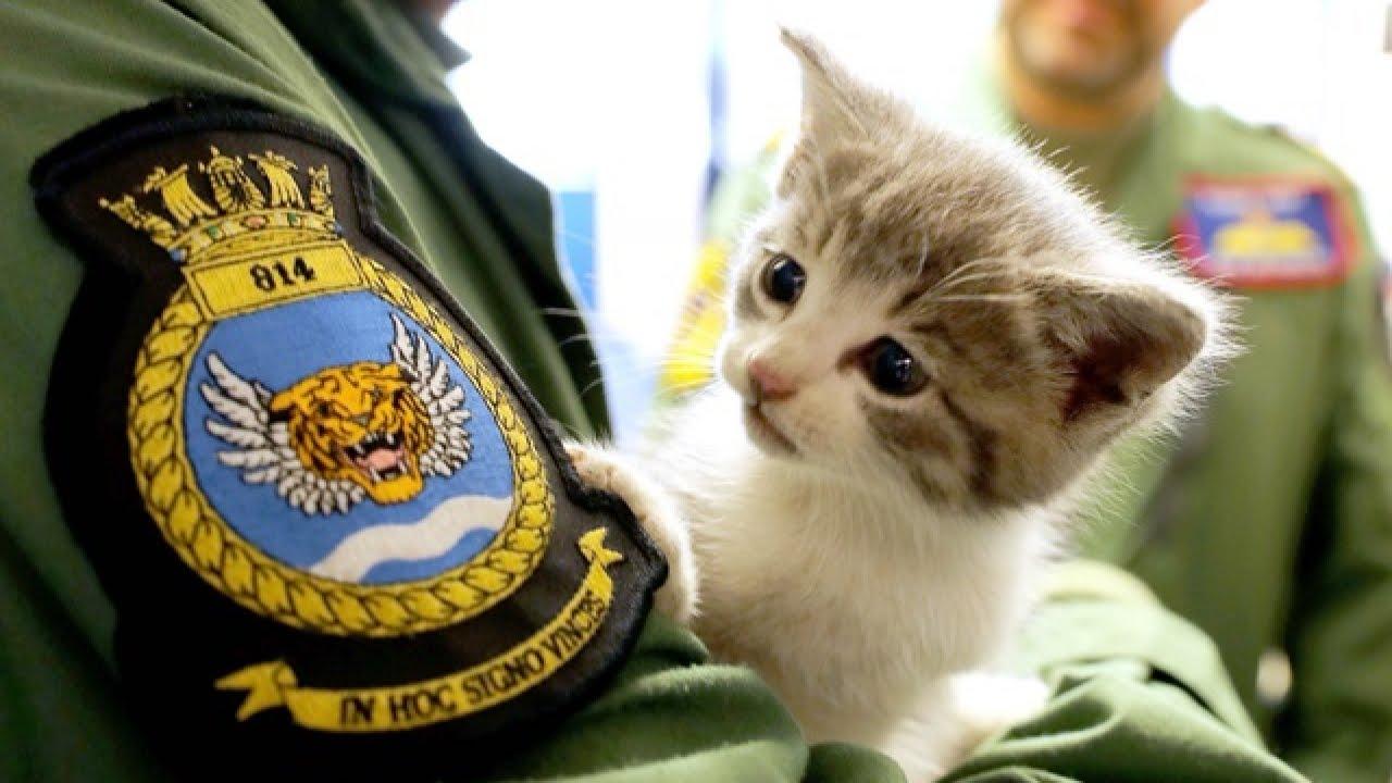 Kitten Survives 300-Mile Ride In Military Pilot's Car Bumper