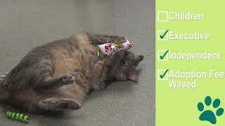 Adoptable Joplin at the Humane Animal Treatment Society