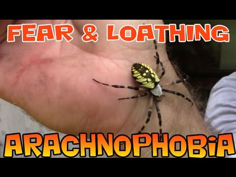 Fear And Loathing And The Argiope Spider Arachnophobia Spider Bite