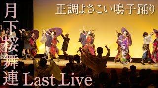 【月下桜舞連 公式】Last Live ③ ~正調よさこい鳴子踊り~