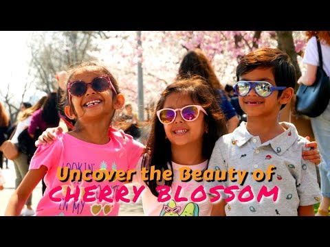 Cherry Blossom Festival at Roosevelt Island New York