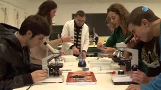 Colegio Internacional Newman - Madrid