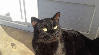 НЕ ДЕТСКИЕ ПРИКОЛЫ Смешные кошки Животные рулят - Смешно до слез (2019) МатроскинТВ