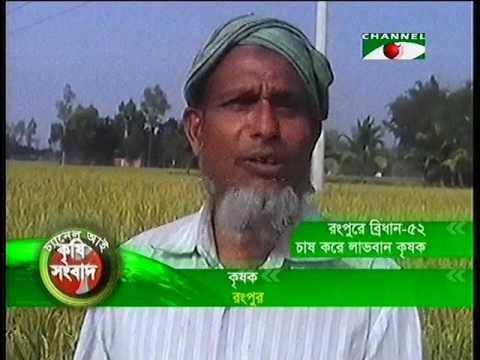 Download Rangpur Brri 52 Dhan Report 27 11 12