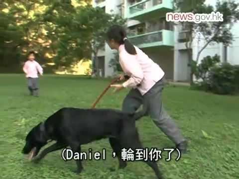 回到出更前 警犬有「家」教(27.11.2011)