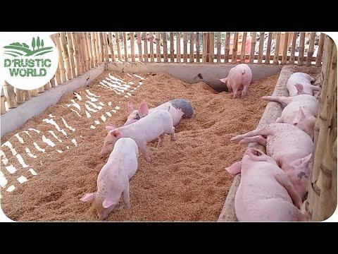How To Make No Smell Pig Pen Backyard Piggery Baboyang Walang