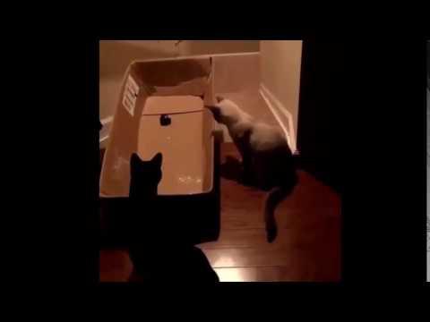 Best Funny cats short video