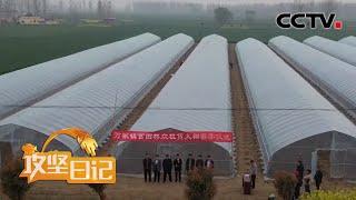 《攻坚日记》 20200703 郭寺村的脱贫路(3)|CCTV农业
