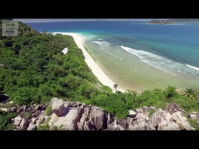 10 Hours of Relaxing Island Sounds | Planet Earth II | Earth Unplugged
