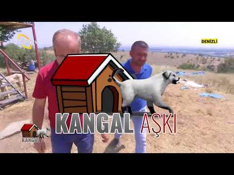 Çoban Köpekleri Bakımı - Kangal Aşkı / Çiftçi TV