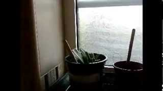 using bathroom window sill as greenhouse got blown away