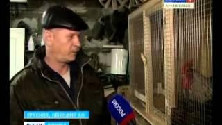 В Ненецком посёлке Красное началась массовая вакцинация домашних животных