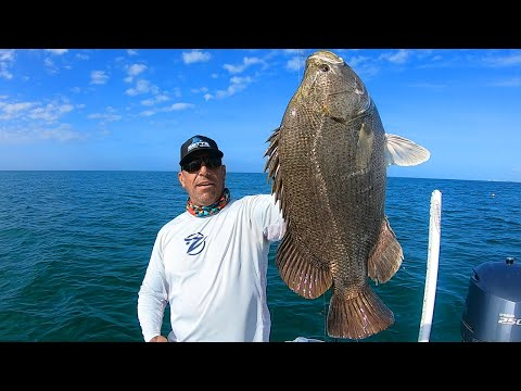 Fishing For Monster Tripletail Fish | Catch And Cook | Anna Maria Island Florida Fishing Captain