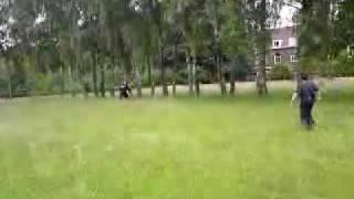 Dutch Police Dog Training