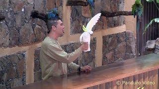 Grand Canaria 2014 Palmitos Park, Parrot show