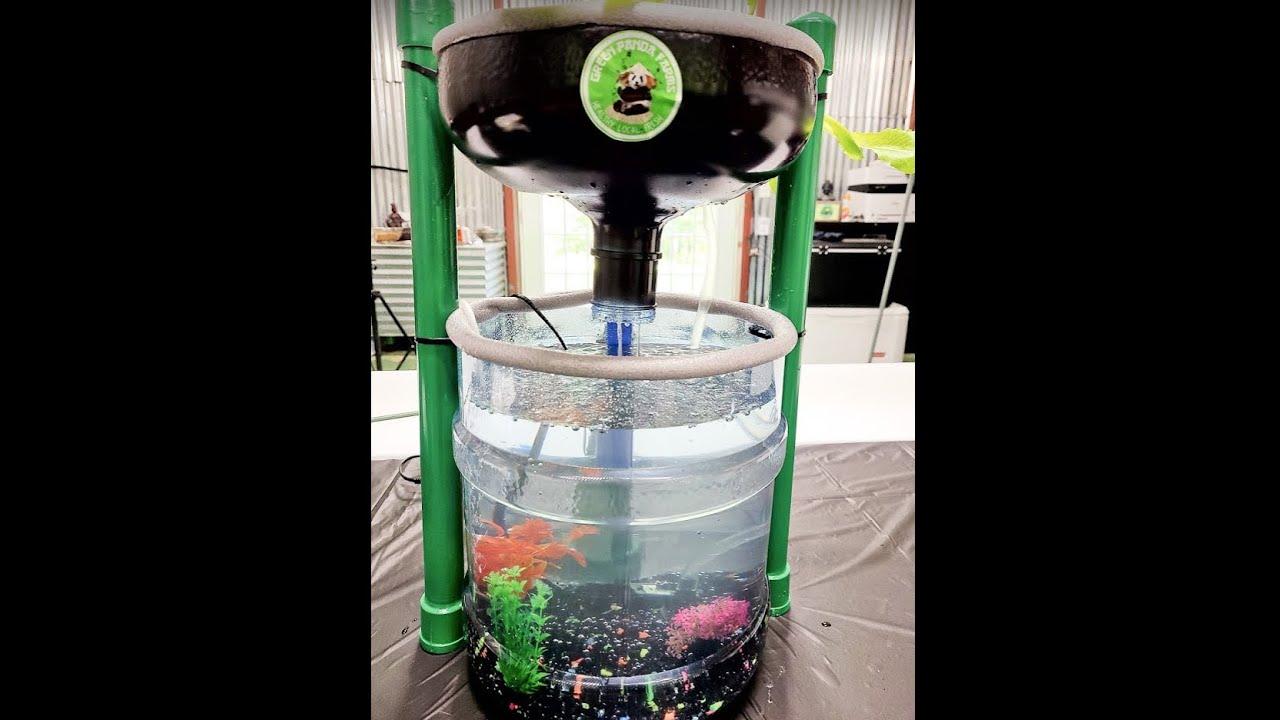 Green Panda Farms  Mini Aquaponic Garden Setup
