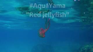 Red jellyfish on Mallorca - by Yamapama