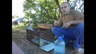 Разведение кроликов в домашних условиях для чайников и дачников(Самый простой способ разведения кроликов. Доступен всем дачникам! На сайте http://krolik-v-yame.ru - о наименее затрат..., 2014-07-28T04:48:00.000Z)