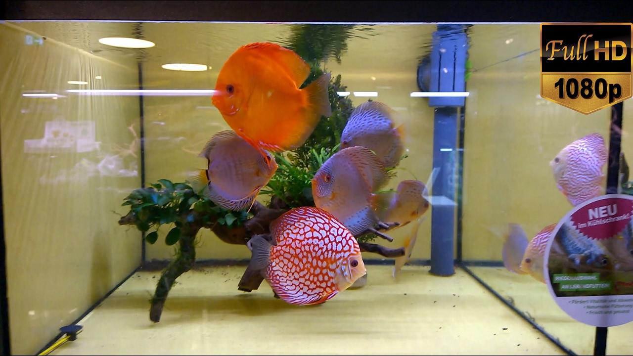 Fish Tanks Aquariums Freshwater Saltwater Beautiful Planted Images, Photos, Reviews
